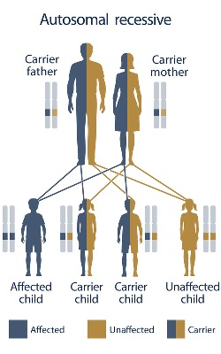 Sickle Cell Disease autosomal recessive inheritance