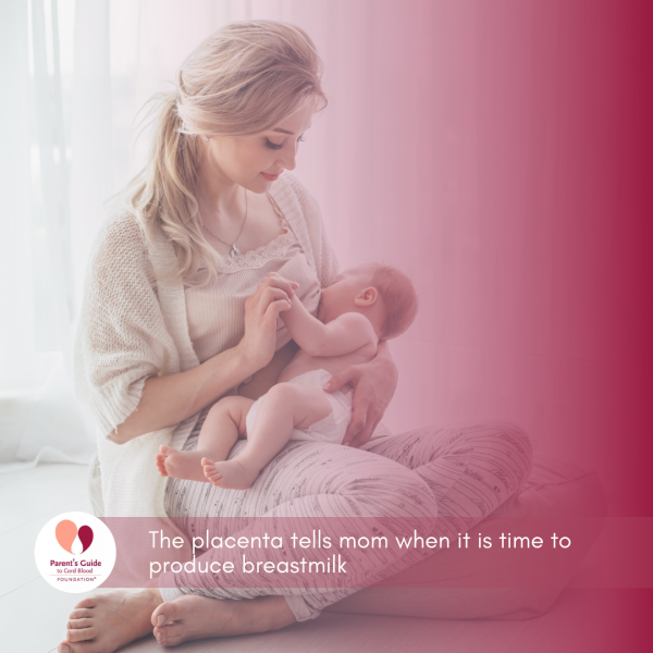 The placenta tells mom when it is time to produce breastmilk